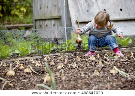Young child on allotment Stock photo © monkey_business