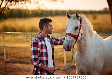 silhouet · paard · strand · zonsondergang · sport · natuur - stockfoto © adrenalina