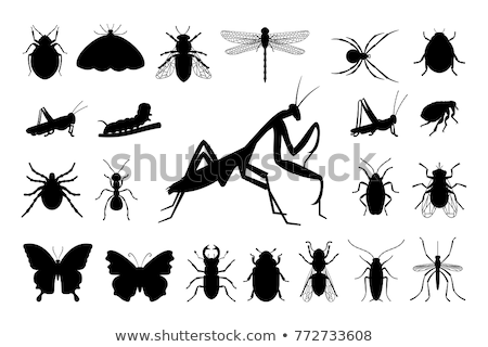Böcek siluetleri vektör ayarlamak kertenkele örümcek Stok fotoğraf © 5xinc