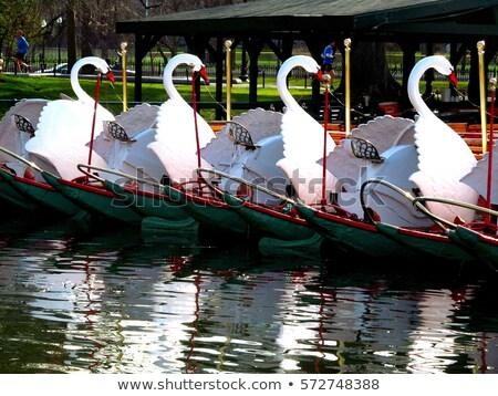Бостон общественного саду лебедя лодках Массачусетс Сток-фото © lunamarina