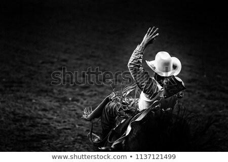 Rodeo örnek gülümseme doğa hayvan çit Stok fotoğraf © adrenalina
