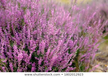 Paisagem campo verão flores silvestres floral Foto stock © cienpies