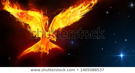 flaming · faucon · illustration · noir · design · feu - photo stock © genestro