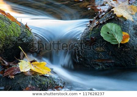 pedras · córrego · atravessar · verde · ponte · pedra - foto stock © stevanovicigor