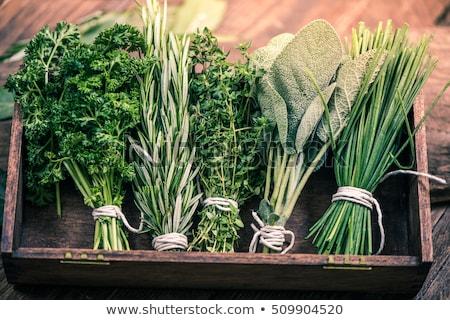 Különböző friss gyógynövények rozmaring menta zsálya Stock fotó © yelenayemchuk