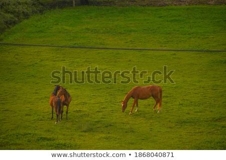 Ginger horse eating grass Stock photo © Hofmeester