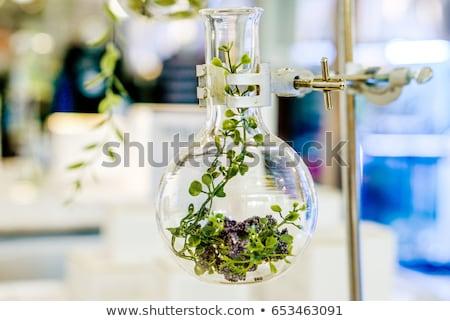 chemistry equipment plants laboratory experimental stock photo © janpietruszka