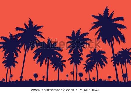 naplemente · égbolt · kókuszpálma · fák · Karib · narancs - stock fotó © ssuaphoto