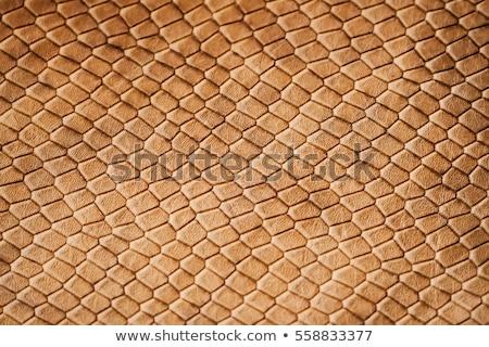 Texture python peau résumé mode Photo stock © OleksandrO