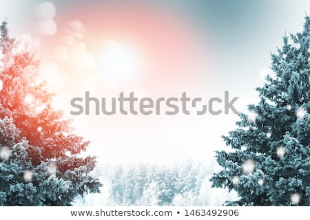Winter and Christmas Background. Photo of Tree Branches Covered with Frost and Snow. Stock photo © maxpro