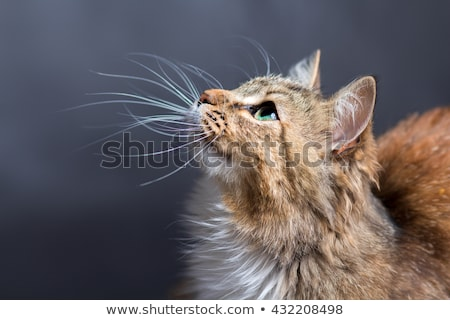 Cats whiskers Stock photo © IS2