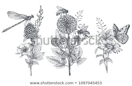 Három minták fű virágok illusztráció virág Stock fotó © colematt