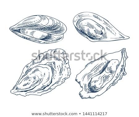 食用 · ポスター · 海洋 · ベクトル - ストックフォト © robuart