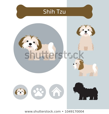 side view of cute and small shih tzu standing Stock photo © feedough