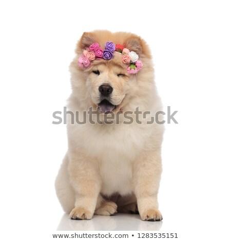 kacsintás · kutya · vicces · állat · áll · koszos - stock fotó © feedough