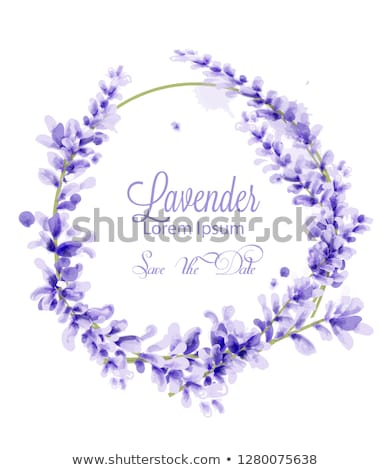 Pink watercolor lavender wreath Vector. delicate floral blooming Stock photo © frimufilms