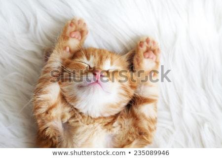 kat · tapijt · groot · gember · vloer · top - stockfoto © galitskaya