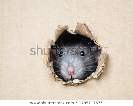 Rato buraco ilustração sorrir projeto desenho Foto stock © colematt