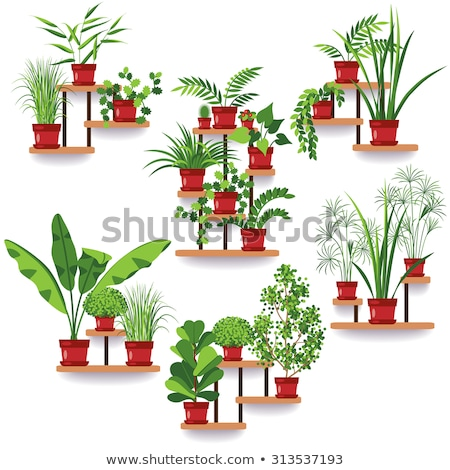 Flower Houseplant in Red Pot, Green Plant Vector Stock photo © robuart