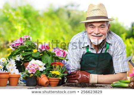 Senior homem flores jardim feliz pessoa Foto stock © HighwayStarz
