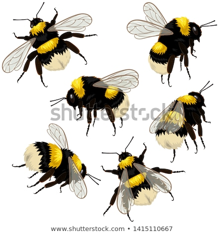Bumblebee Stock photo © dsmsoft