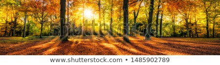 sonbahar · gökyüzü · vektör · afiş · yaprakları · orman - stok fotoğraf © adamson