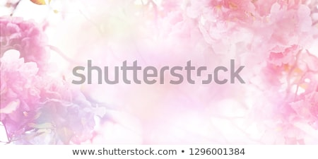 valentine blue and pink floral background stock photo © elmiko