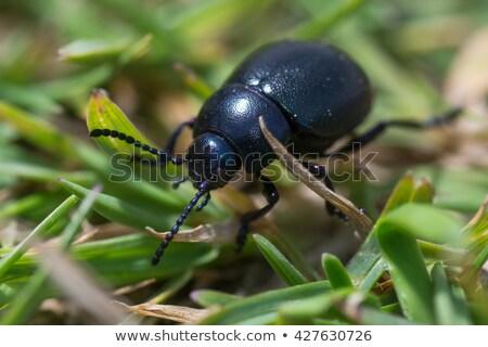 Bogár rovar napfény vér száj Anglia Stock fotó © suerob