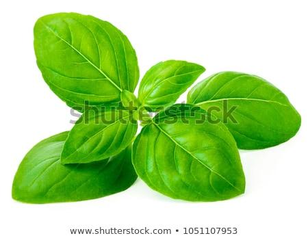 Basilic fraîches blanche feuille jardin usine Photo stock © kasiap