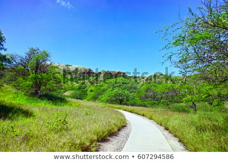 Interior of Diamond Head Crater Stock photo © backyardproductions
