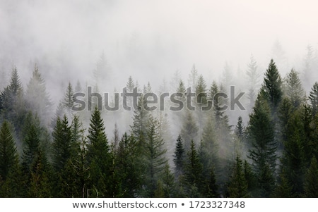 Stock photo: Sunrise in the foggy forest.