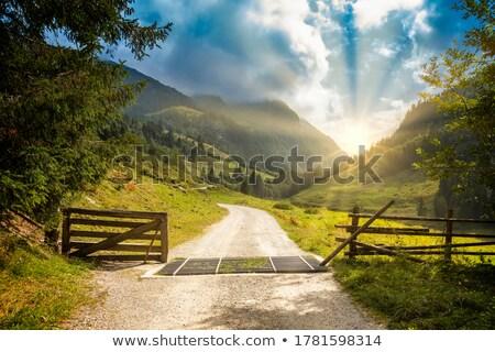 Opened door on green grass stock photo © MikhailMishchenko