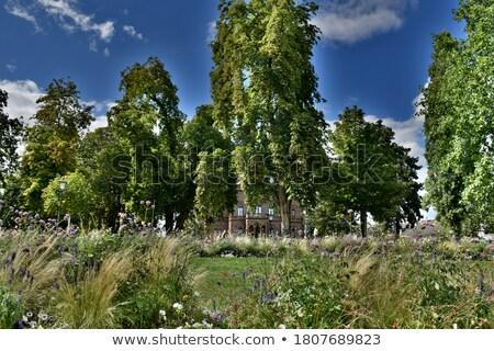 Colombipark in Freiburg Stock photo © prill
