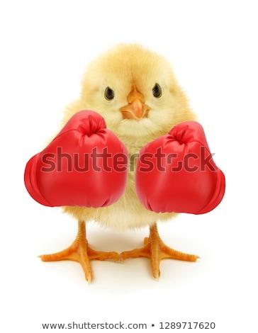 USA · boksen · amateur · bokser · uniform · poseren - stockfoto © sahua