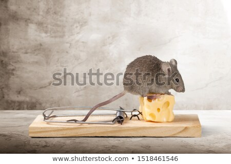 Muis val kaas hout dood plastic Stockfoto © carenas1