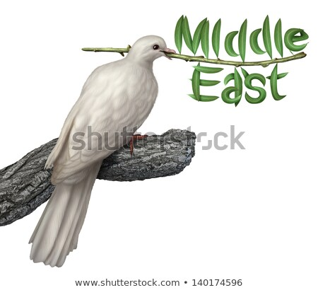 middle east peace plan stock photo © lightsource