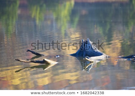 oude · zomer · park · boom · textuur · bos - stockfoto © jkraft5
