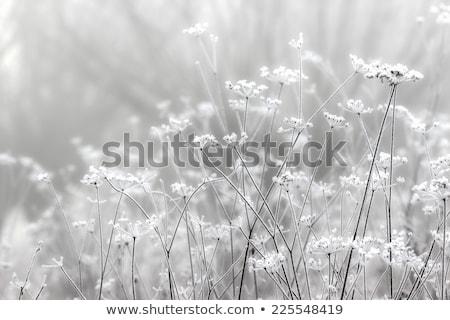 Восход · туманный · луговой · Финляндия · трава · лес - Сток-фото © lunamarina