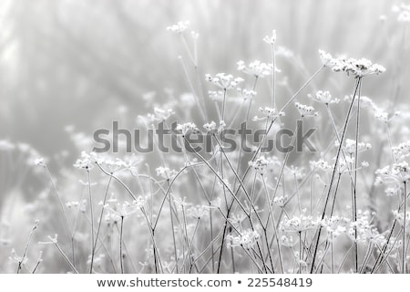 foggy meadow landscape gray winter fog Stock photo © lunamarina