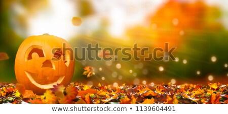 Dekorasyon güzel sonbahar yaprakları soyut yaprak Stok fotoğraf © kaczor58
