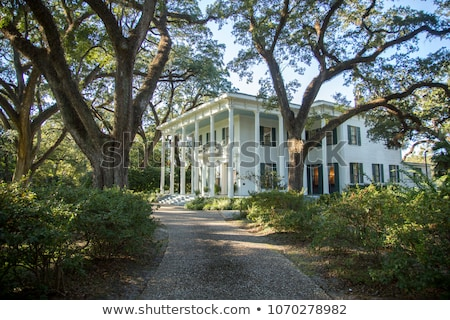 white southern mansion stock photo © meinzahn