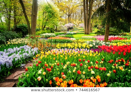 Holland coloré printemps pelouse fleurs Photo stock © neirfy