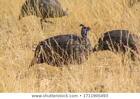 safari · park · Namibya · su · doğa · çöl - stok fotoğraf © imagex