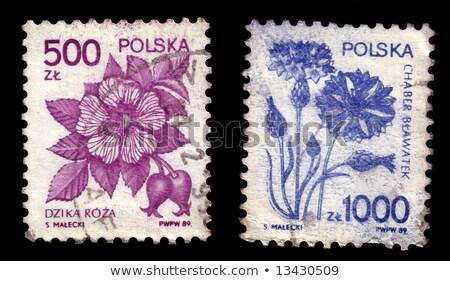 Dog on Polish postmark Stock photo © andromeda