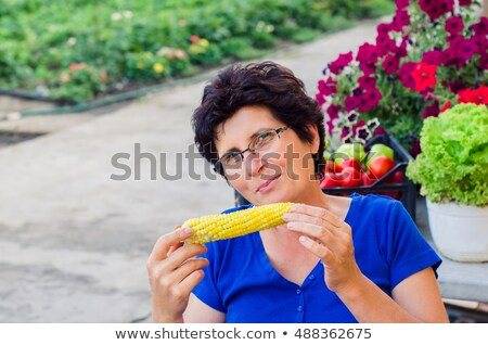 vegetarian break with boiled corn cobs stock photo © nalinratphi