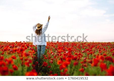 Poppies at Sunset Stock photo © suerob