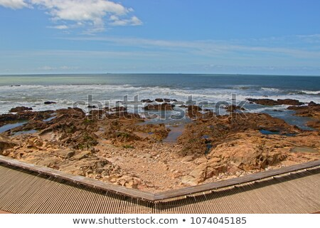 Promenade océan côte district printemps arbres Photo stock © rognar