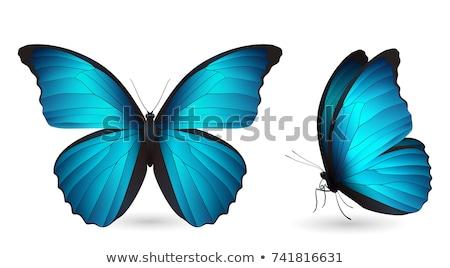 Grande árvore lagarta borboleta natureza verão Foto stock © Relu1907