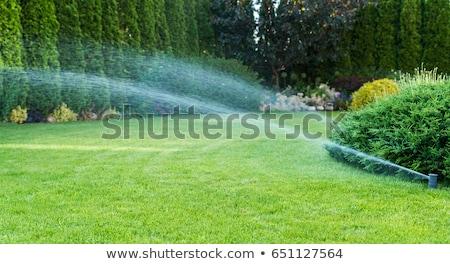 орошение · разбрызгиватель · зеленый · сельского · хозяйства · области · воды - Сток-фото © stevanovicigor