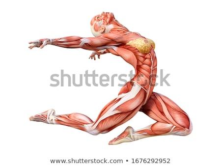 Donna anatomia figura rendering 3d posizione riposo Foto d'archivio © mariephoto